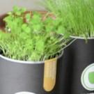 Gras über den Kaffee wachsen lassen